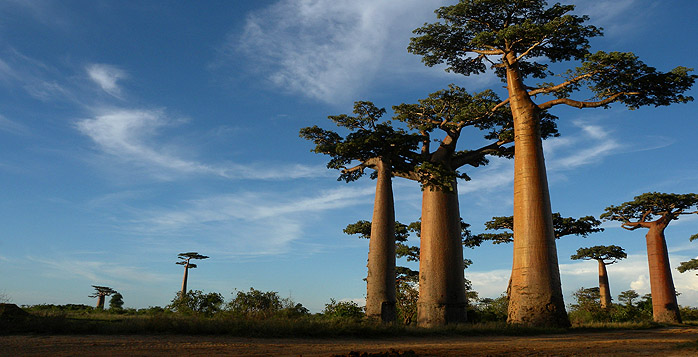 Picture from Madagascar, Africa